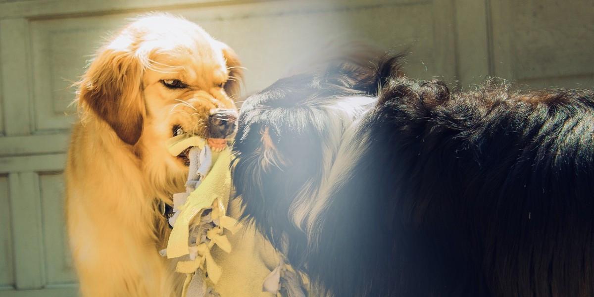 Mon chien est agressif, que faire ?