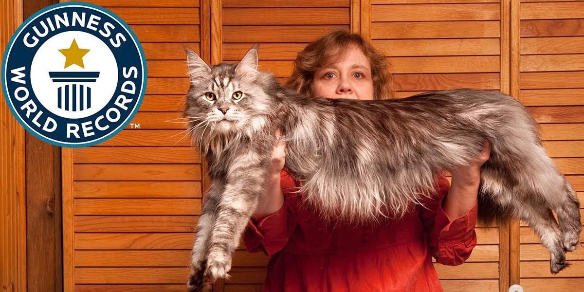 Plus gros chat du monde