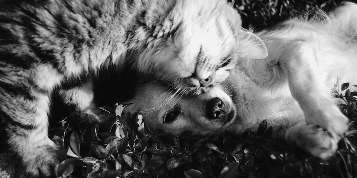 Est-ce que les croquettes pour chat sont bonnes pour les chiens ?