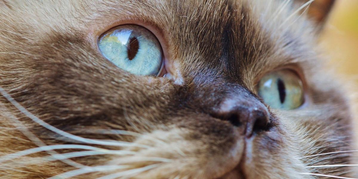 Un chat avec de gros yeux