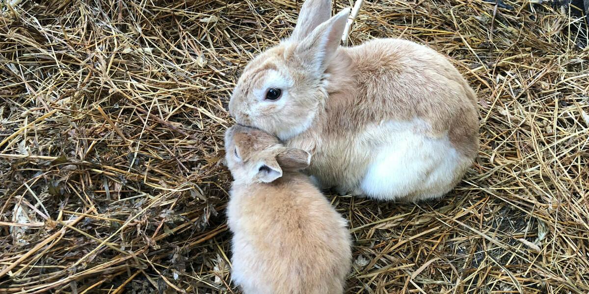 Quelle litière choisir pour son lapin ?