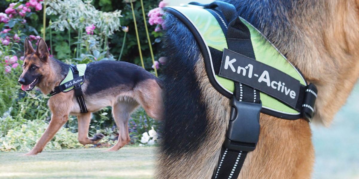 Quel harnais pour un chien qui tire ?
