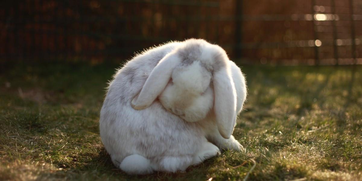 Mon lapin perd ses poils, que faire ?