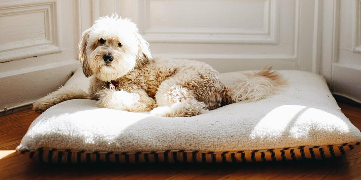 Comment prévenir l'arthrose du chien ?