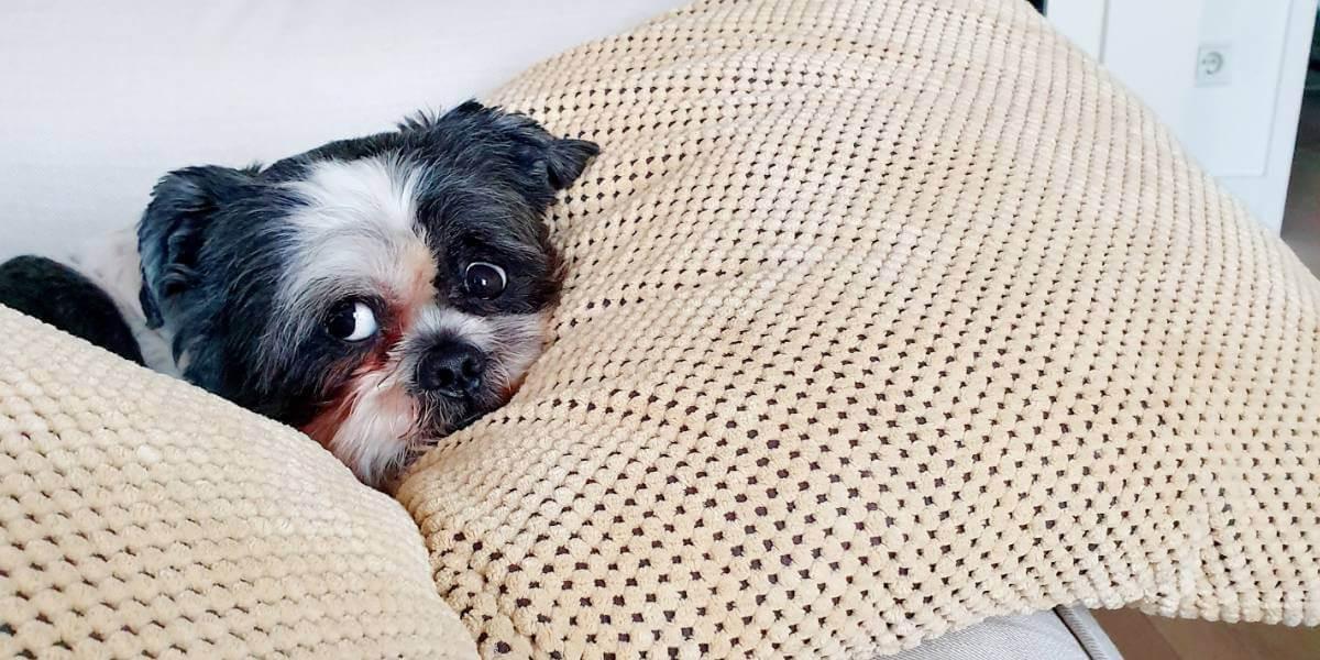 Comment choisir un coussin pour son chien ?