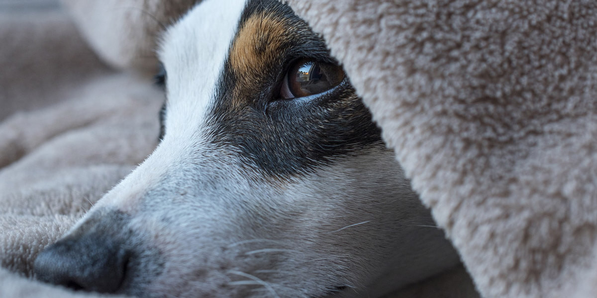 Terre de diatomée pour chien
