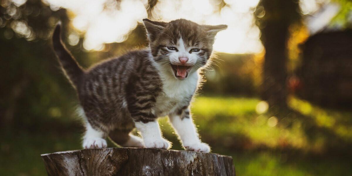 Quel est le poids d'un chaton ?