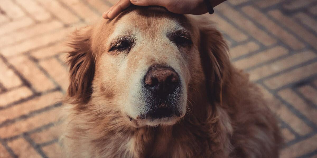 Quel traitement pour l'arthrose du chien ?