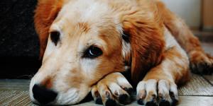 Vermifuge pour chien naturel