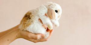 Comment couper les griffes de mon lapin ?