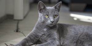 Mon chat souffre d'insuffisance rénale, que faire ?