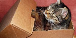 Déménager quand on a un chat