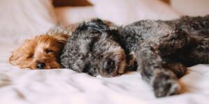 Comment soulager les articulations de mon chien ?