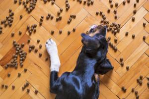 Quelles sont les meilleures croquettes pour chien ?