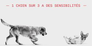 Croquettes pour chien sensible