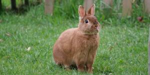 Peut-on laver un lapin ?