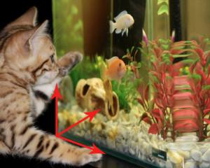 Calcul du litrage d'un aquarium