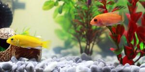 Prénom pour poisson
