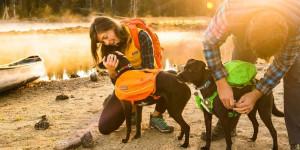 Harnais avec poche pour chien
