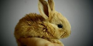 Comment dresser un lapin ?