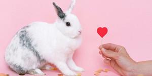 Les aliments toxiques du lapin