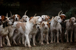 Chenil pour chien de chasse
