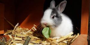 Diarrhée du lapin