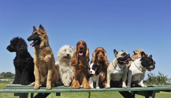 Les groupes de races de chien