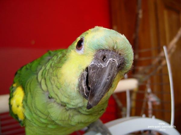 Questions à se poser avant d'adopter un oiseau ?