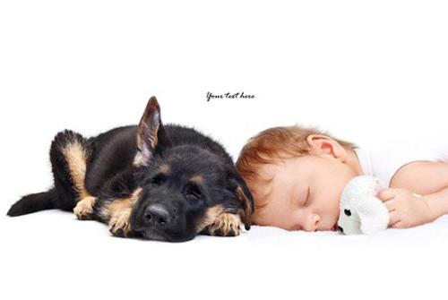 Bien choisir son éleveur de chien