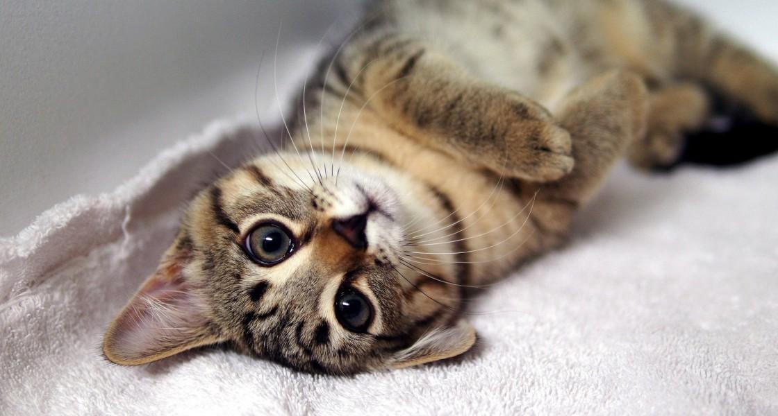 Arrivée du chaton : comment le rendre heureux