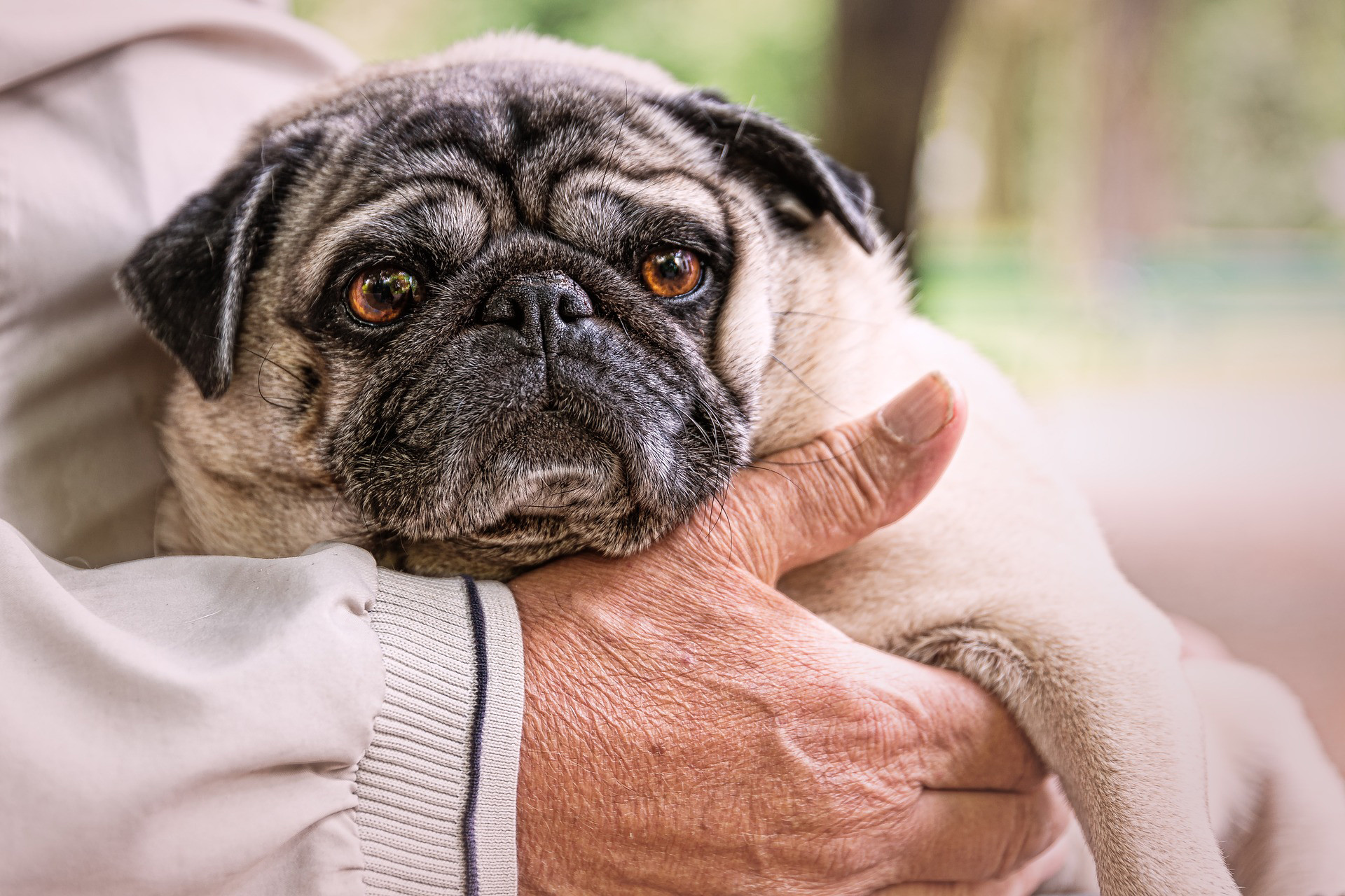 Choisir un chien pour un senior