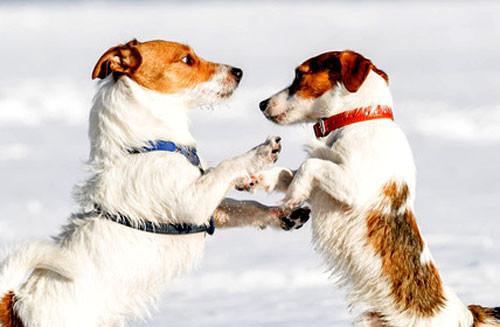 Collier ou harnais pour votre chien ?