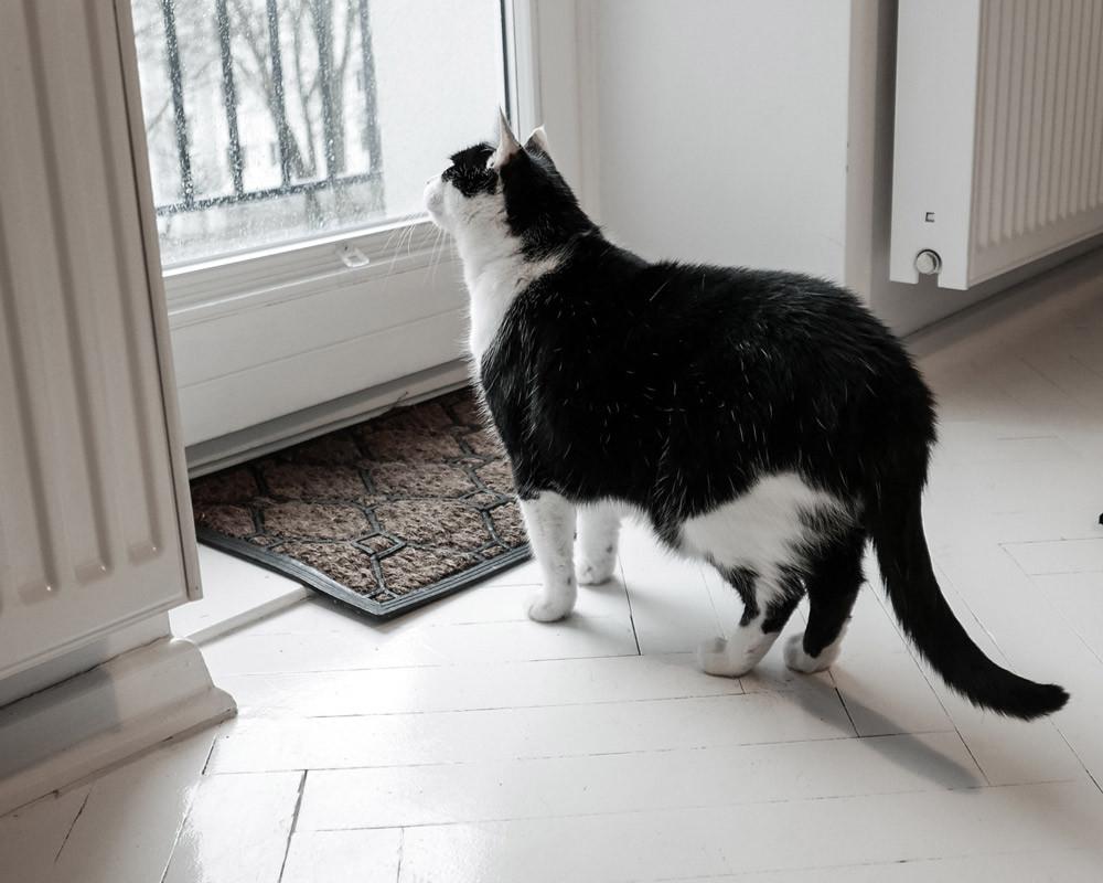 Combien de temps peut on laisser un chat seul ?