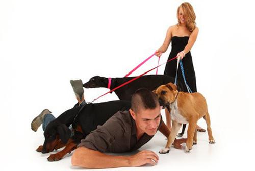 Comment apprendre la marche au pied à son chien