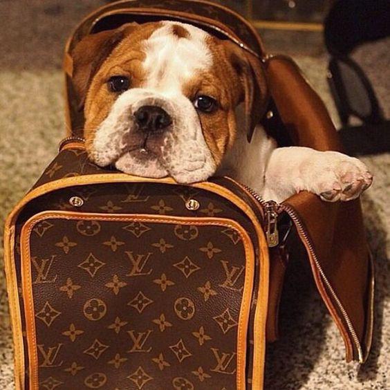 Comment choisir un sac de transport pour mon chien ?