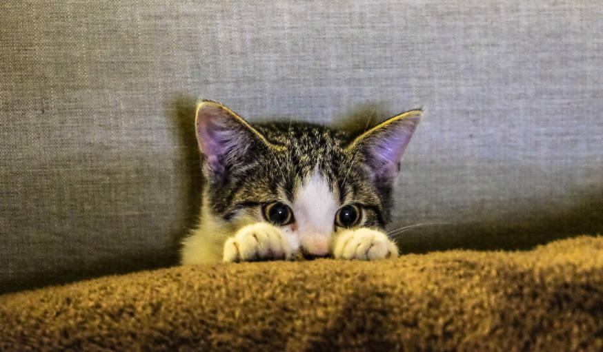 Comment désinfecter la plaie d'un chat ?
