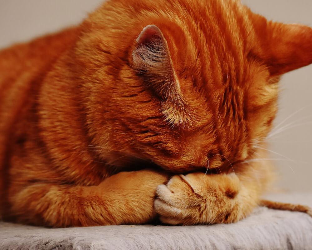 Comment enlever l'odeur d'urine de chat ? [résolu]