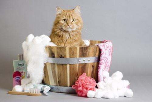 Comment et pourquoi laver son chat ?