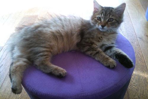 Comment nourrir un chat stérilisé ?