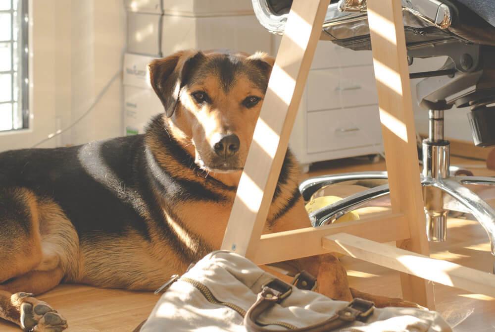 Comment occuper son chien pendant le confinement?