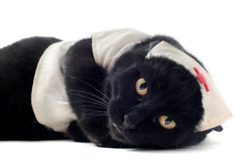Comprendre, prévenir et traiter le calcul urinaire chez le chat