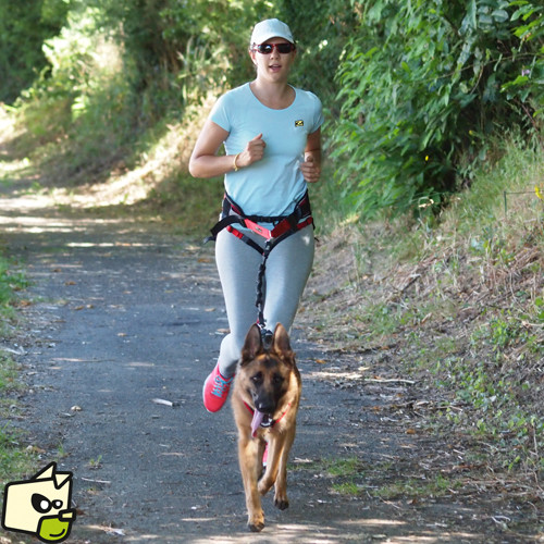 Quelle race de chien pour le Canicross ?