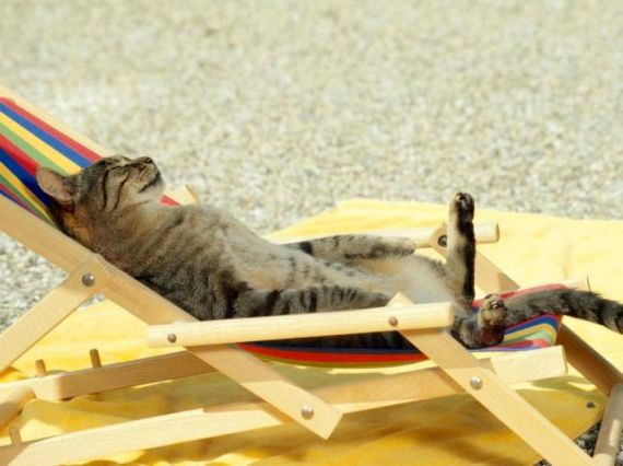 Doit-on emmener son chat en vacances ?