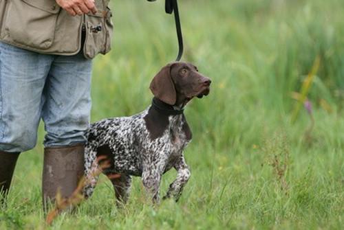 Collier Anti Aboiement Petsafe Avis - 10 techniques à savoir - Comme les pros - Guide du chien