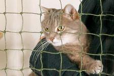Protégez votre balcon pour la sécurité de votre chat