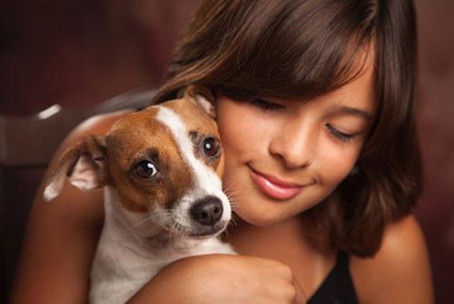 Jack Russell Terrier: fiche de race