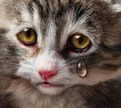 J'ai perdu mon chat : comment le retrouver ?