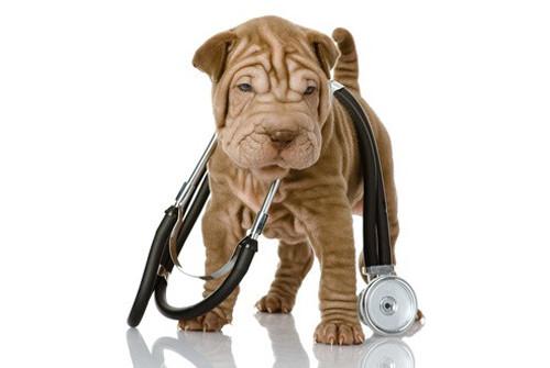 La liste complète des DSV pour l'élevage de chien et de chat en France