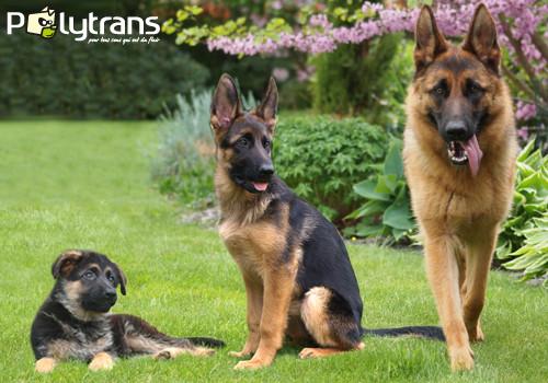 L'âge du chien et chat en équivalence humaine